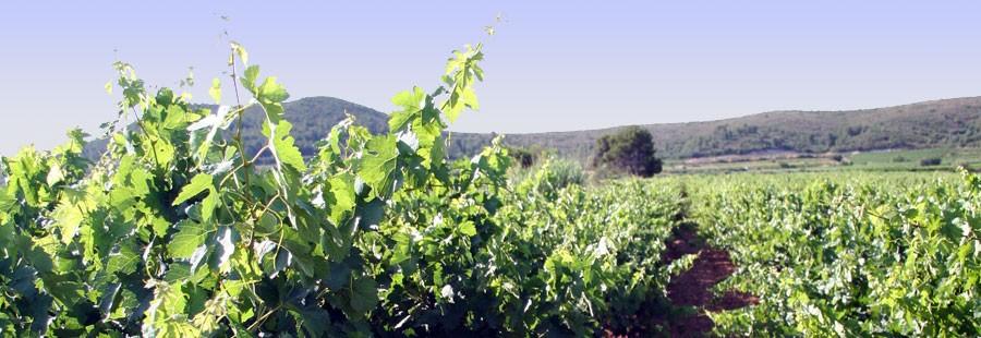 Viveros tirso aguirre frutales olivos y vides en alfaro for Viveros frutales pdf